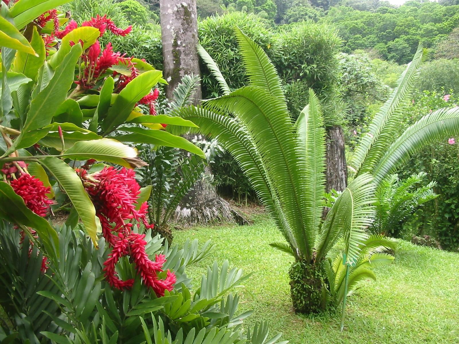 Fond d 39 cran image au jardin de balata photo de mich le for Jardin japonais fond d ecran