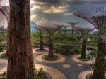fond ecran Gardens by the Bay - Singapour